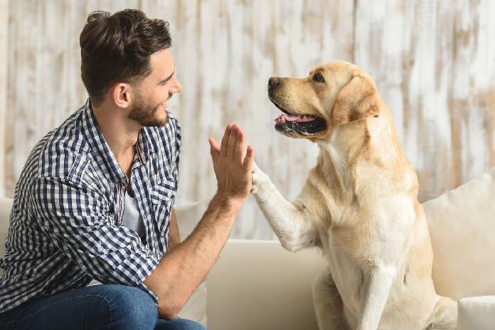 Cómo mantenerte saludable con mascotas